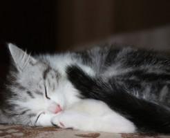 清酒酵母の深い眠り